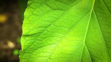 Cerca de textura verde en hoja video