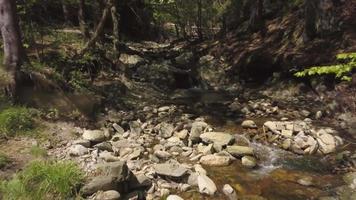 Vuela de regreso sobre un arroyo en 4k video