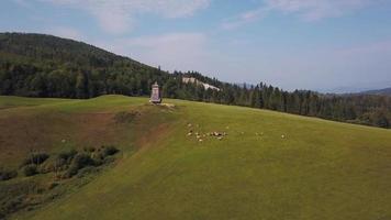 drone vuela sobre vacas cerca de una atalaya en 4k