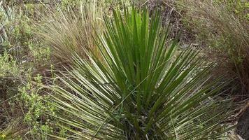 plantas e grama no monte movidas pelo vento video