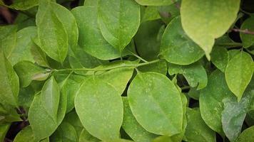 close up de folhas verdes claras