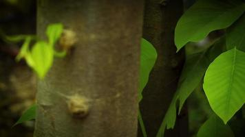 Gruppen von Blättern und Bäumen im Garten