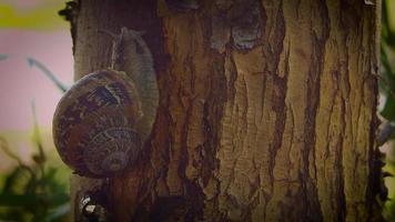 caracol na árvore