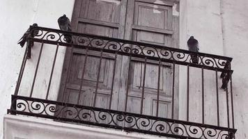 Three Pigeons On A Balcony