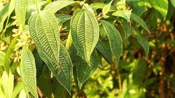 ramas con hojas texturizadas movidas por el viento video