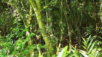 Escena verde del bosque con plantas y árboles.