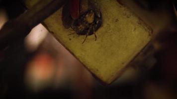 die versteckte Spinne video