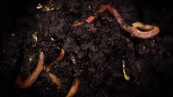 lombrices de tierra en la caja de abono video