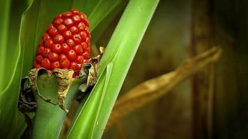 pequenas sementes e folhas vermelhas video