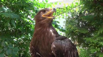 Portrait of Falcon sitting in tree nature