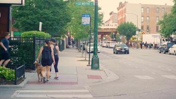 mulheres com um cachorro andando na faixa de pedestres e calçada