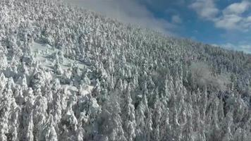 Drone footage over trees in the mountain at winter