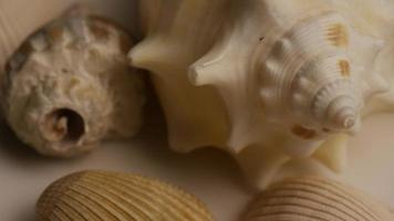 Rotating stock footage shot of sea shells - SEA SHELLS 005