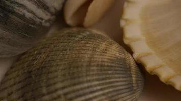 Rotating stock footage shot of sea shells - SEA SHELLS 008