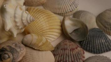 Rotating stock footage shot of sea shells - SEA SHELLS 004