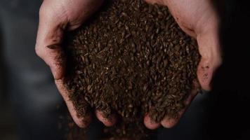 Imágenes en cámara lenta de suministros y procesos de elaboración casera de cerveza: elaboración de cerveza 062