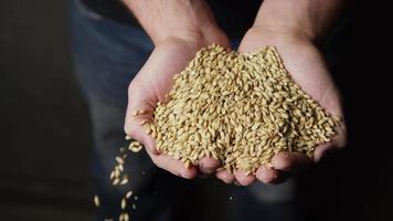 filmati al rallentatore di forniture e processi di produzione di birra in casa - produzione di birra 057