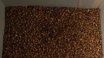 filmati al rallentatore di forniture e processi di produzione di birra in casa - produzione di birra 031
