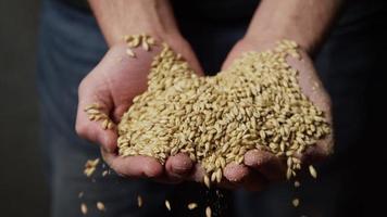 filmati al rallentatore di forniture e processi di produzione di birra in casa - produzione di birra 055