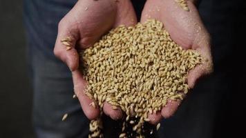 filmati al rallentatore di forniture e processi di produzione di birra in casa - produzione di birra 056