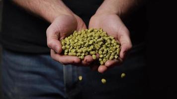Imágenes en cámara lenta de suministros y procesos de elaboración casera de cerveza: elaboración de cerveza 063