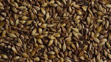 dose rotativa de cevada e outros ingredientes de fabricação de cerveja - fabricação de cerveja 095 video