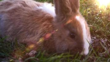 Easter white bunny sitting in the grass video