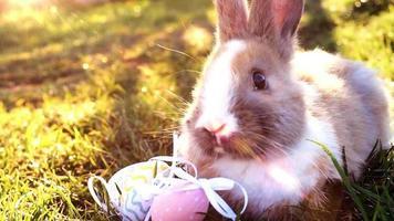 coelhinho branco com ovos de páscoa sentado na grama