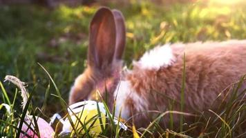 Easter white bunny with easter eggs sitting in the grass video
