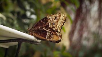 borboleta marrom e amarela em prato branco