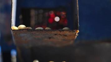 processo a umido con chicchi di caffè recentemente maturi da piante di caffè