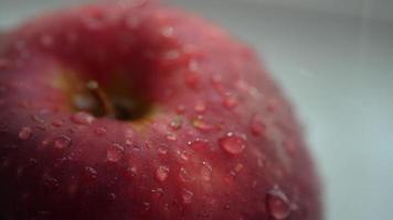 la bella fine fresca rossa della mela su ha fermato un po 'di pioggia