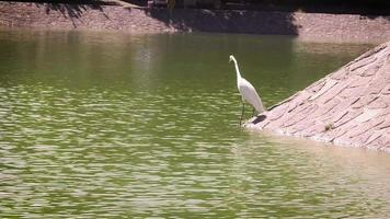 Heron Fishing In Artificial Lake Chapultepec Mexico