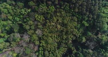vista aérea de la selva tropical en la montaña