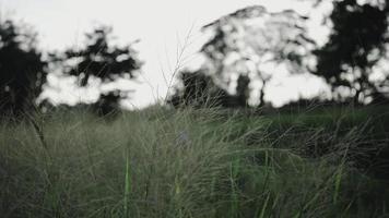 Der Wind weht wunderschön gesäumtes Gras.