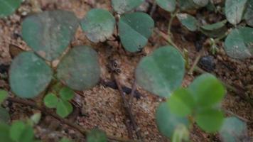 Cerca de hormigas negras en el suelo trabajando juntas en la naturaleza.
