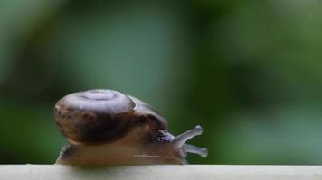 close up de um pequeno caracol movendo-se através de um galho. video