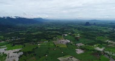 aerial view flying over a green rice farm in Thailand