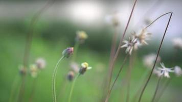 Cerca de las flores del campo de hierba
