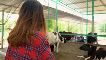 Beautiful asian woman or farmer with and cows in cowshed on dairy farm-Farming, and animal husbandry concept.