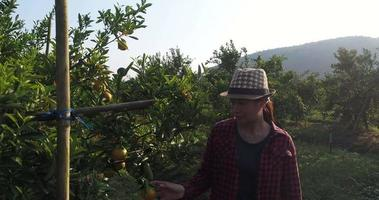 The owner of an orange garden is happy with his fruit trees video