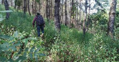 joven senderismo en la selva tropical con mochila.