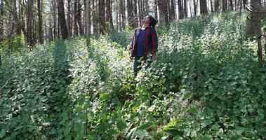 junger Mann, der im tropischen Dschungel mit Rucksack wandert. video