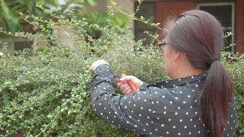 mujer asiática jardinero cortando setos.