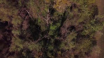 drone voando acima de árvores em 4k video