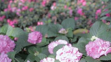 flor de lírio e fundo de folha verde no jardim no ensolarado dia de verão ou primavera video