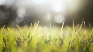 fundo de grama verde (loopable).