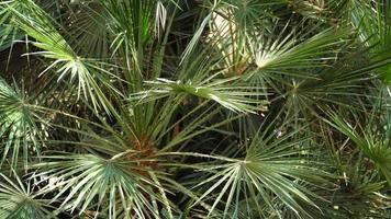 verdes tropicales exóticos jugosos brillantes en el clima ecuatorial del bosque selvático. Fondo con inusual follaje de plantas balanceándose. textura natural con hojas jugosas