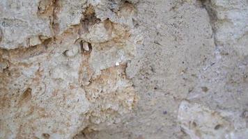 fundo de textura de parede de pedra velha video
