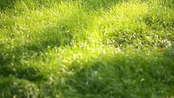 primer plano de hierba verde vibrante. macro de hierba verde. Fondo natural abstracto de hierba verde y belleza borrosa bokeh. verano video